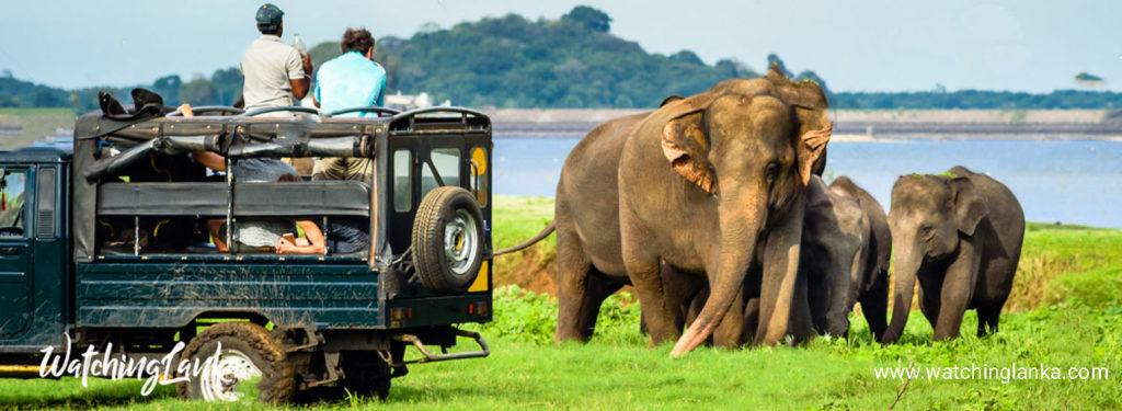 Wilpattu Safari in Sri Lanka