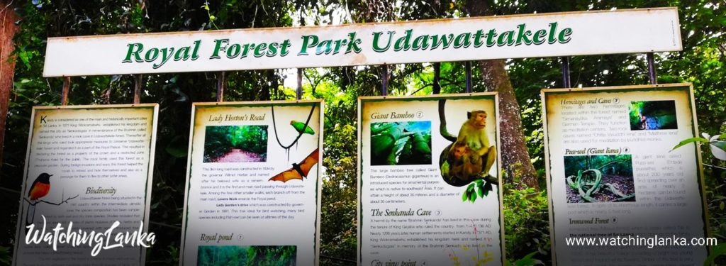 Udawattakele Forest Reserve in Kandy