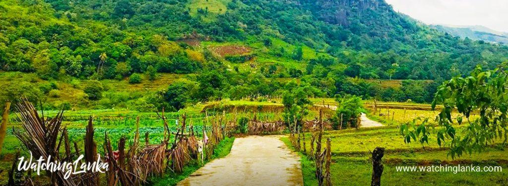 Hidden Village Of Knuckles Mountain Range - Atanwala