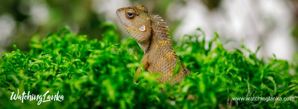 World Reptile Day 2020